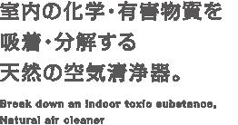 室内の化学・有害物質を吸着・分解する天然の空気清浄器。